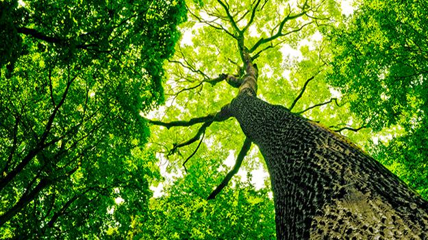 Perché tornino gli alberi a cantare